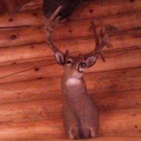 Kay's Log Cabin Hunting and Lodging