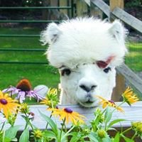 Burgis Brook Farm Alpacas
