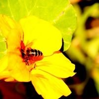 Old Nectar