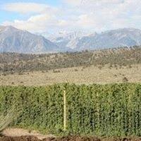 Banner Springs Ranch