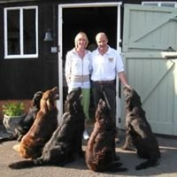 Branscombe Kennels & Cattery