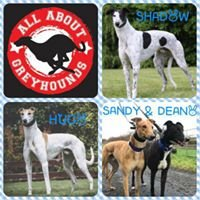 All about Greyhounds NI