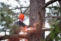 Tree Lopping Service Ipswich