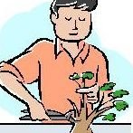 Bonsai Wholesalers