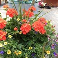 Sallys Greenhouse