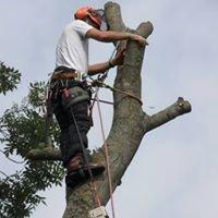 Shrewsbury Tree Surgeon