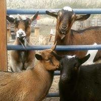 Five Goat Farm