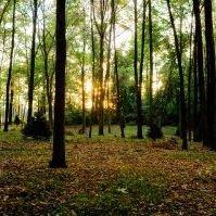Kessler Woods Natural Burial Ground