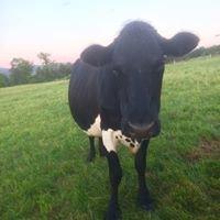 Mooshine Cattle Co.