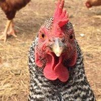 Happy Cock Farm
