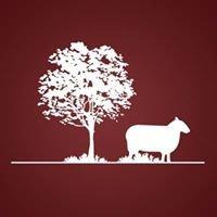 Mouton Frileux