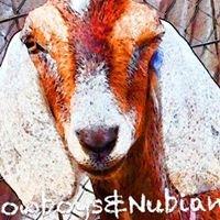 Cowboys&Nubians Dairy Goats