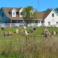 Spruce Hill Fiber Farm ~ Angora Goats