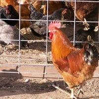Empty Nest Chicken Ranch
