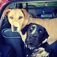 Dogcando - Puppy and Dog Training and Behaviour