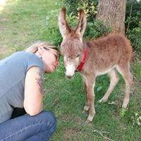 Blue Donkey Farm
