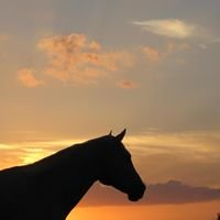 Sunset Trail Rides Bastrop, Texas