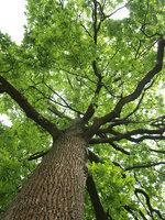 Anaheim Tree Care