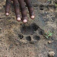 Greenlife Africa Safaris
