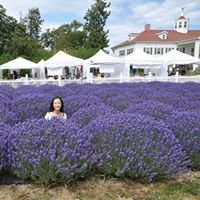 Washington Lavender Festival