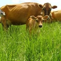 Radiance Dairy