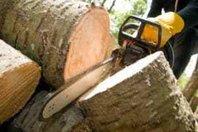 Carolina Tree Pros