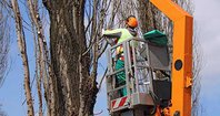 Tree Service Peoria