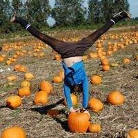Biringer's Black Crow Pumpkins & Corn Maze