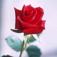 Rose Florist & Gift Shop