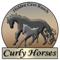 Hidden Cave Ranch Curly Horses