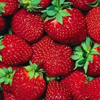 Paulridge Berry Farm