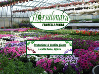 Vivaio Alghero Florsalondra (Fratelli Pinna)