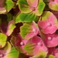 Vorup Blomster