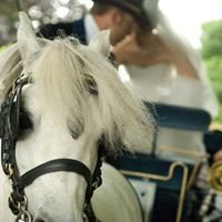 Horsedrawn wedding carriages from Angelbank Carriages