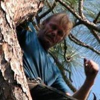 Wimberly & Son Tree Service