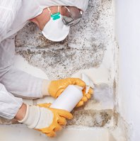 My Mold Removal NYC
