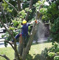 Chesapeake Tree Service