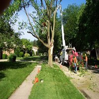 Tree Service Dayton OH
