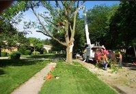 Eugene Tree Service