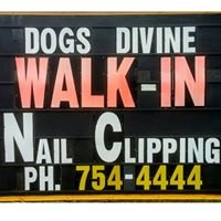 Dogs Divine Grooming and Supplies