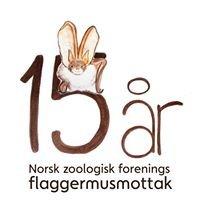 Norsk Zoologisk Forenings Flaggermusmottak / Norwegian Bat Care Centre