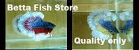 BETTA FISH STORE BETTA FISH FOR SALE