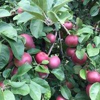 Stuart's Fruit Farm