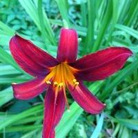 Lord's Homestead Florist