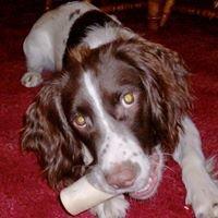 Dial A Dog Wash Maldon