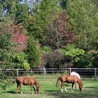 Southern Dutchess Equestrian Center