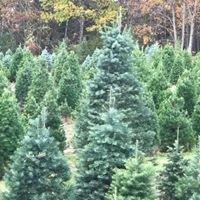 Battenfeld's Christmas Tree Farm