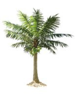 HAWAII TREE SERVICE