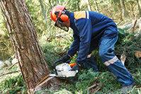 Stillwater Tree Tamers