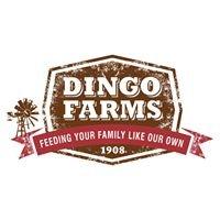 Dingo Farms
